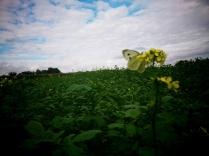Nature en fleur et son papillon