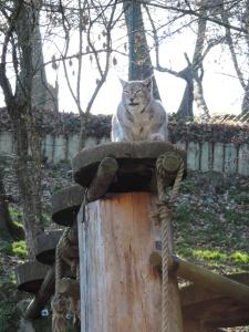 Lynx de Sibérie (14)