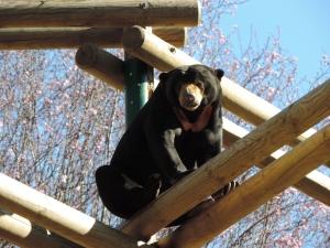 Ours à collier (11)