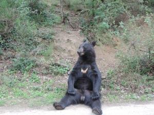 ours à collier (9)