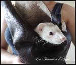 Petit sac pour ma fufu  (4)