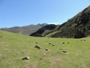 Plateau de la gentiane (12)