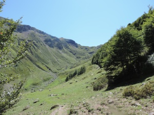 Plateau de la gentiane (27)