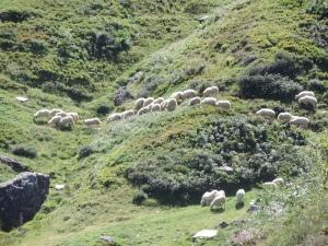 Plateau de la gentiane (28)