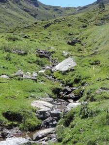 Plateau de la gentiane (31)